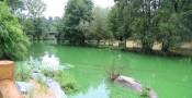 Algues bleues : Cyanobactéries
