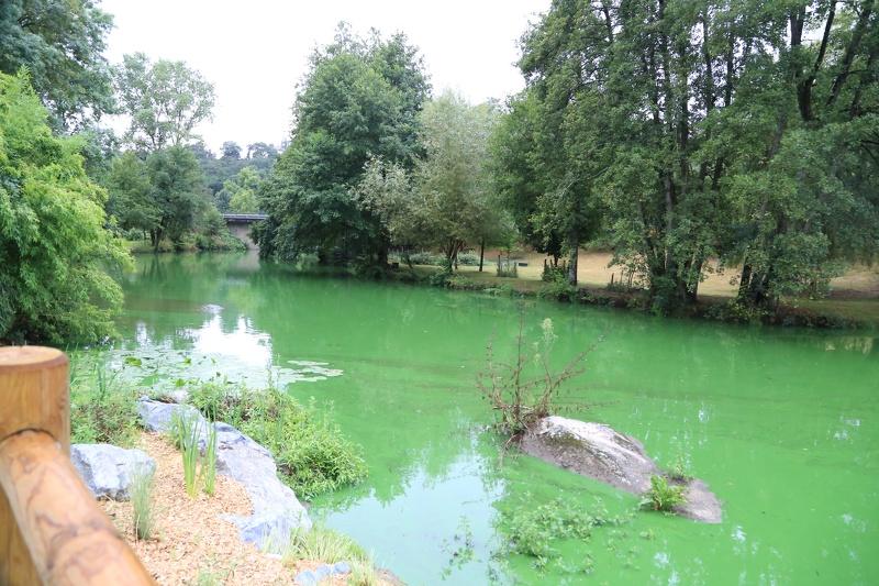 cyanobacterie